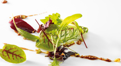 MUGARITZ_Mustards_Krniges_Dressing